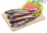 Nguồn dĩnh dưỡng cá bống