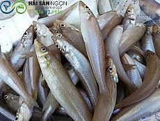 Cá bống biển (cá bống đục)