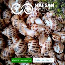 Ốc hương – Đặc sản thơm ngon và bổ dưỡng từ biển cả